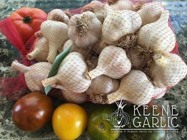 Garlic Bulbs for making Black Garlic