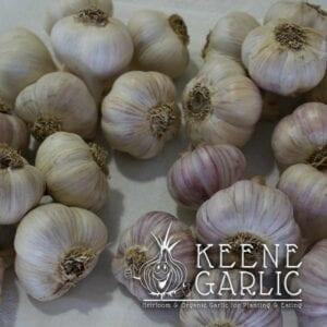 3lb. Gardeners Delight Garlic Package