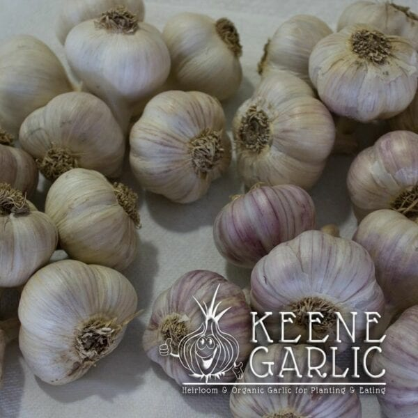 3lb. Gardeners Delight Garlic Package