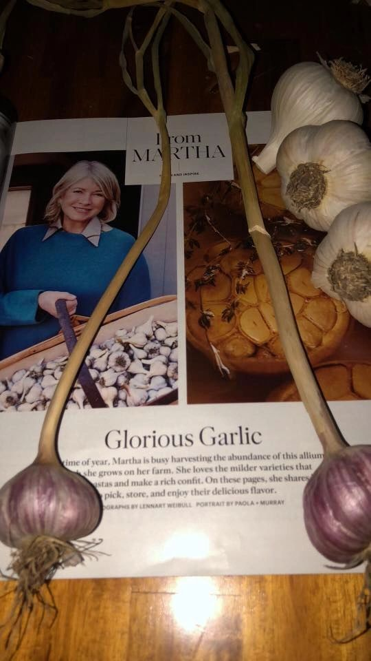 Martha Stewart Magazine on Growing Keene Garlic
