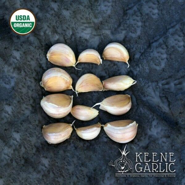 Amish Rocambole Organic Keene Garlic