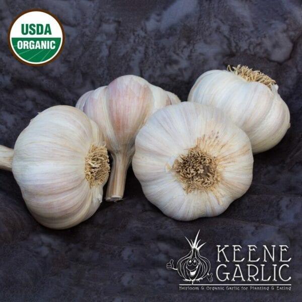 Amish-Rocambole-Organic-Keene-Garlic