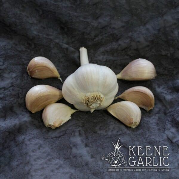 Armenian Organic Garlic Bulbs
