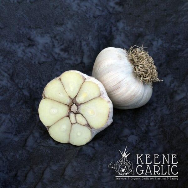 Asian Tempest Keene Garlic