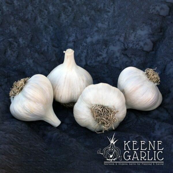 Asian Tempest Keene Garlic Bulbs