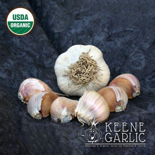 Asian Tempest Organic Garlic Bulbs