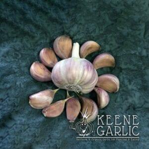 Chesnok Red Garlic Bulbs