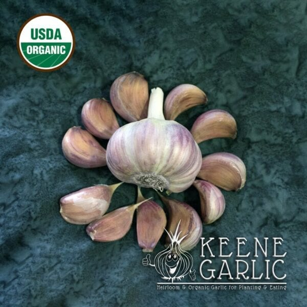 Chesnok Red Organic Garlic Bulbs