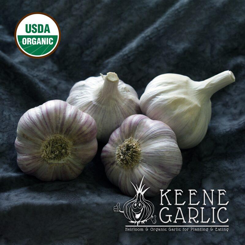 Chesnok-Red-Organic-Keene-Garlic