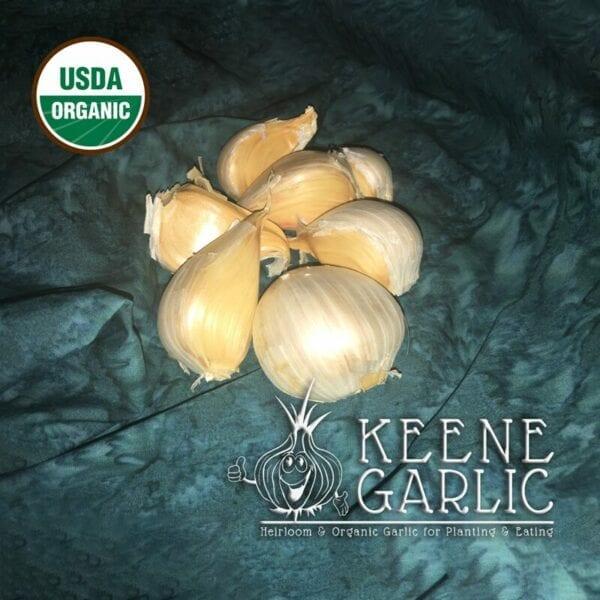 Certified Organic Elephant Garlic