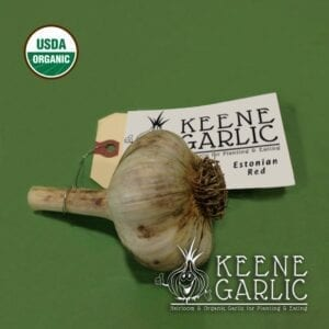 Estonian Red Organic Keene Garlic Bulbs