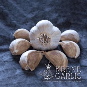 Georgian Crystal Garlic Bulbs