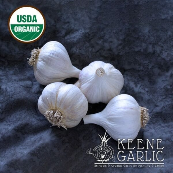 Georgian Crystal Organic Garlic Bulbs