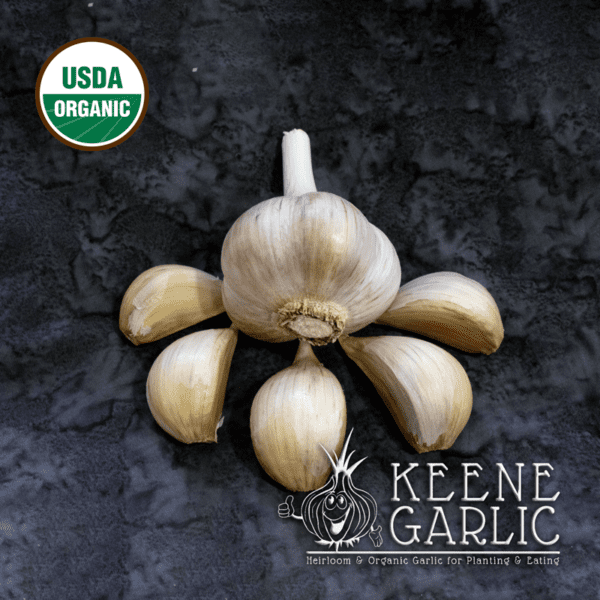 Georgian Fire Organics Keene Garlic Bulbs