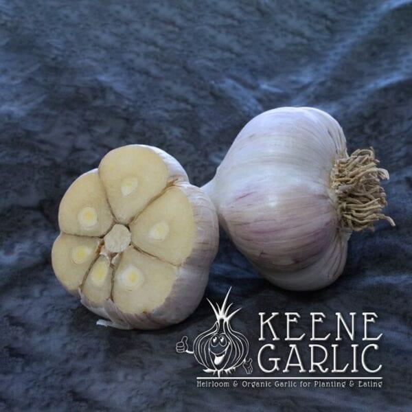 German Extra Hardy Keene Garlic Bulbs
