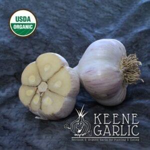 German Extra Hardy Organics Keene Garlic Bulbs