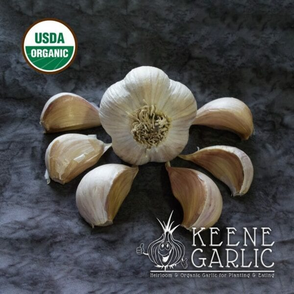 German Extra Hardy Organics Keene Garlic Bulbs