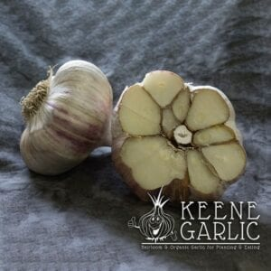 German Red Keene Garlic Bulbs