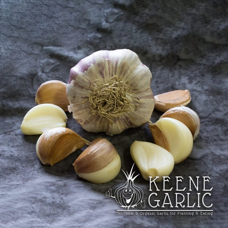 Ready to Plant Garlic Growing Plants Sets Bulbs 50 German Red