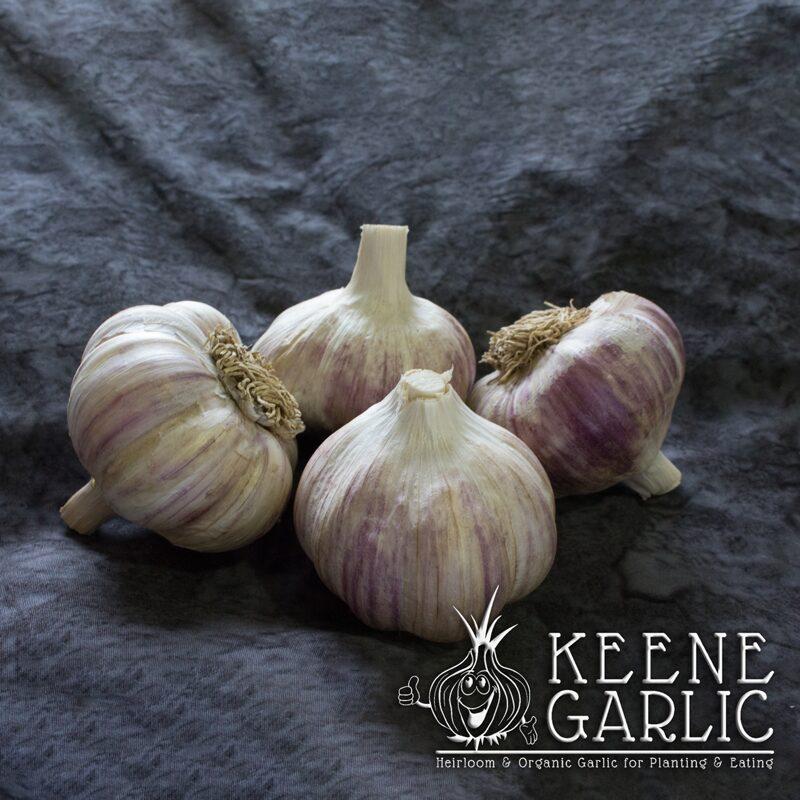German-Red-Keene-Garlic
