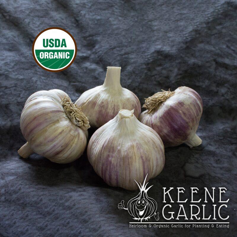 German-Red-Organic-Keene-Garlic
