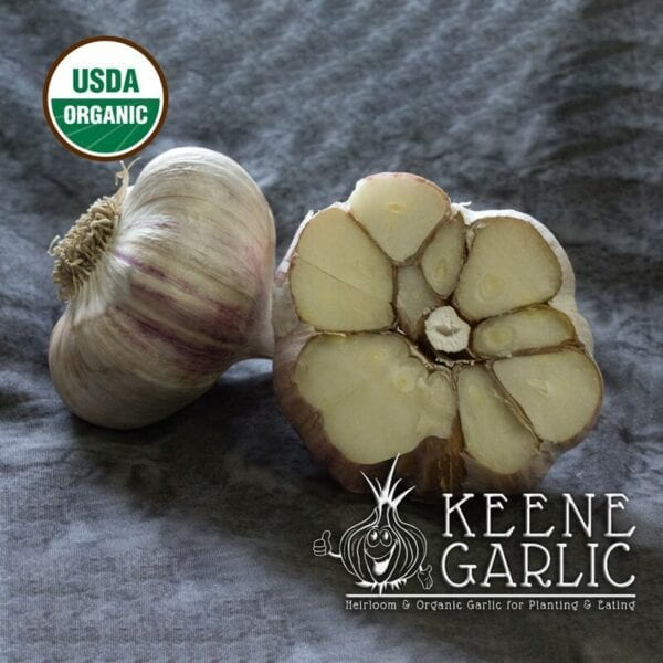 German Red Organics Keene Garlic Bulbs