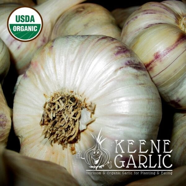 Inchelium Red Organic Keene Garlic Bulbs