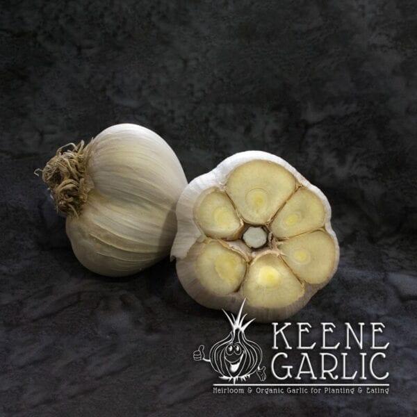 Italian Red Keene Garlic bulbs