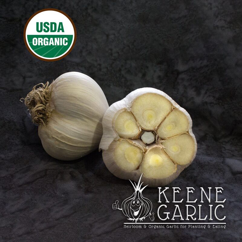 Italian Red Organic Keene Garlic Bulb