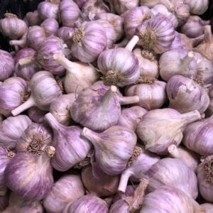 Russian Giant Garlic Bulbs
