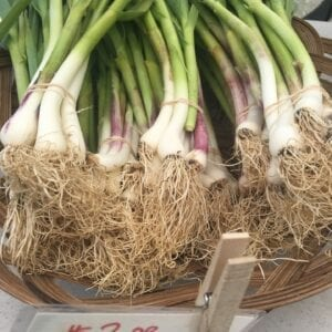 Green Garlic at Farmers Market