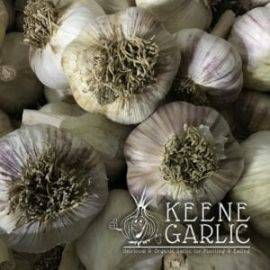 Metechi Keene Garlic Bulbs