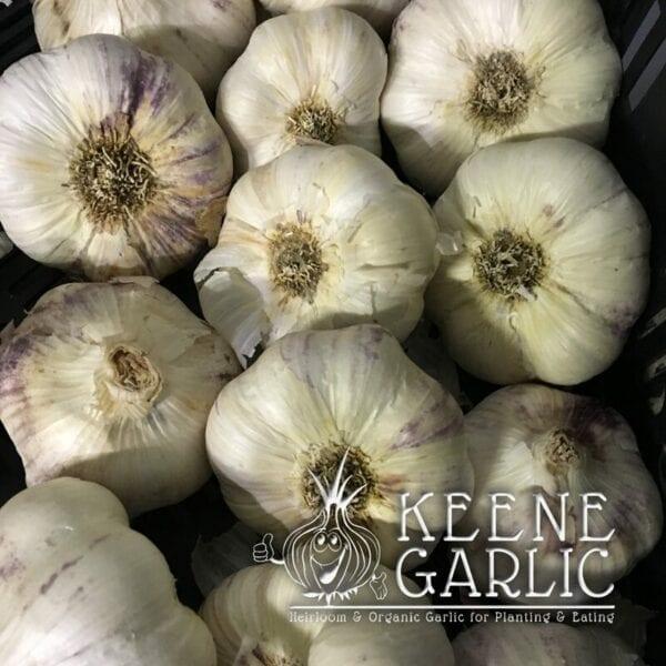 Metechi Keene Garlic Bulbs