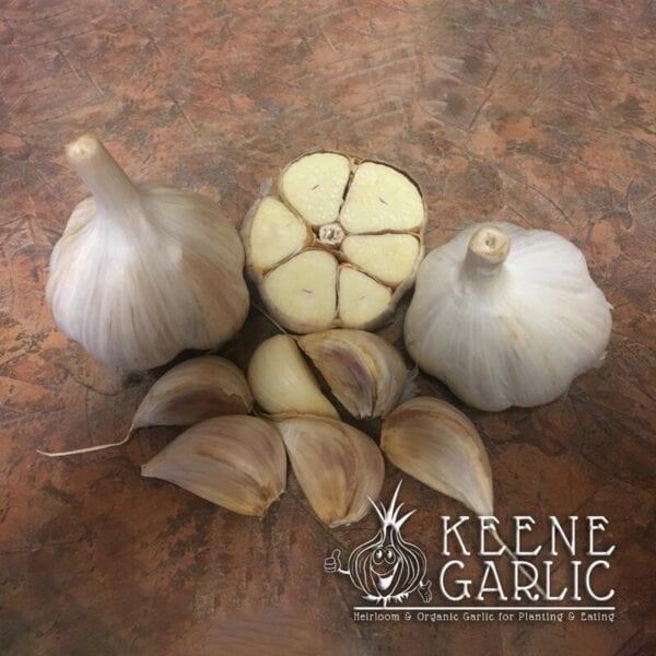 Music Keene Garlic Bulbs