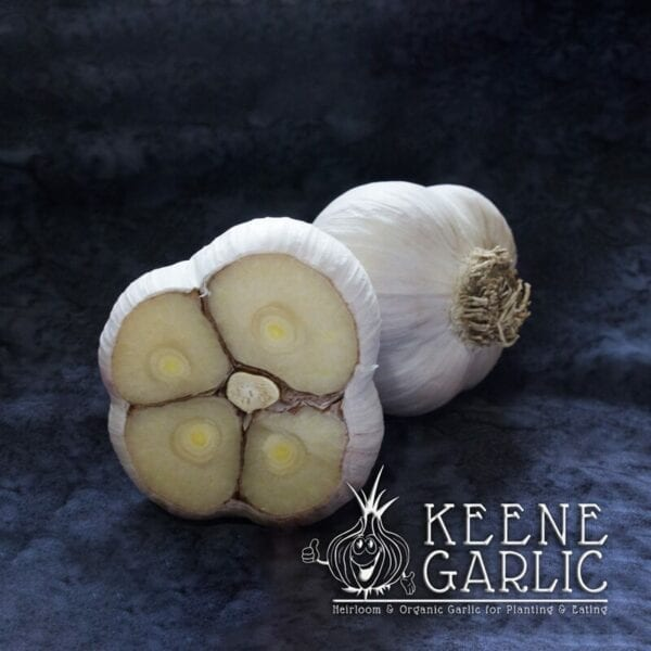 Music Keene Garlic Bulbs