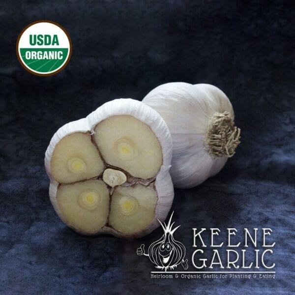 Music Organics Keene Garlic Bulbs