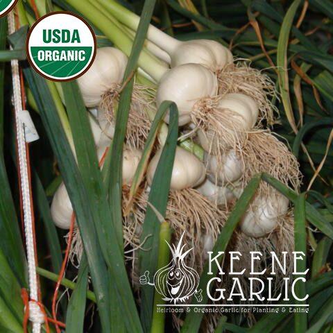 Music-Organics-Keene-Garlic