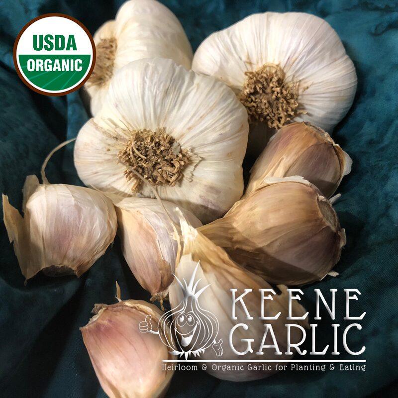 Northe Marbled Purple Stripe Organic Garlic Bulb