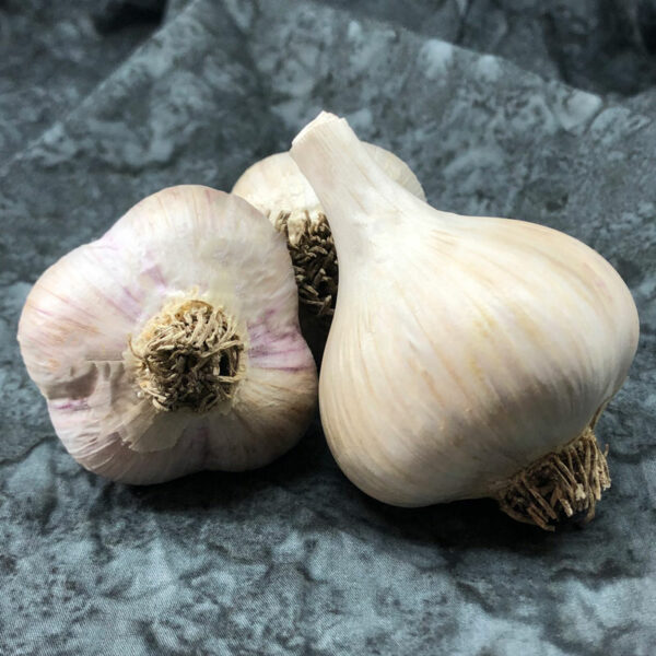 Northern White Keene Garlic