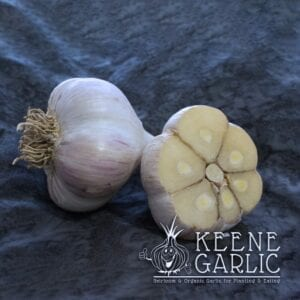 Northern White Keene Garlic Bulbs