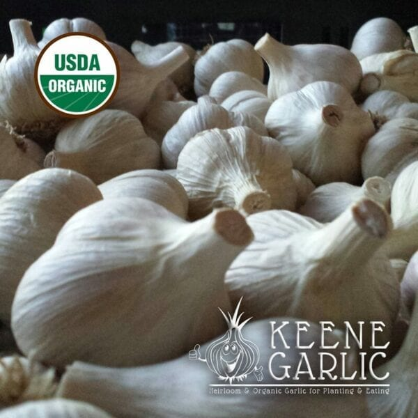 Northern White Organics Keene Garlic Bulbs