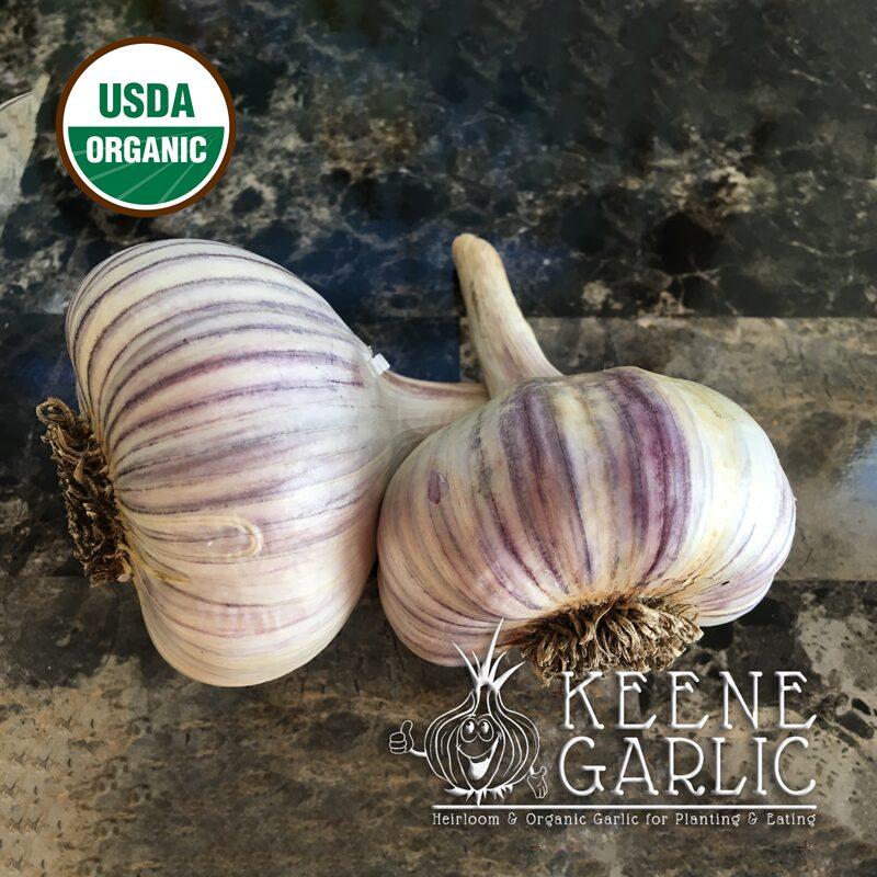 Pehoski Purple Organic Keene Garlic Bulbs