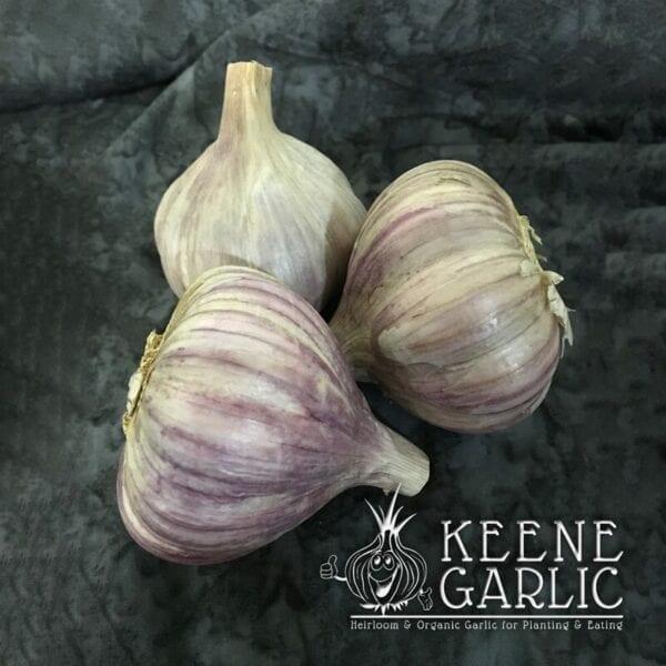 Persian Star Keene Garlic Bulbs