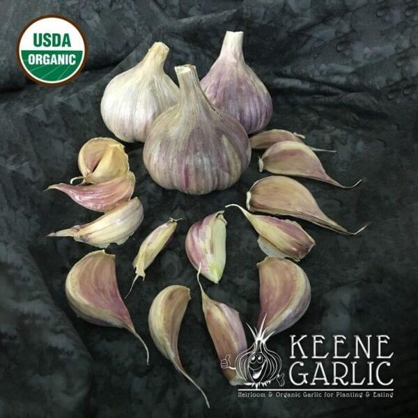 Persian Star Organics Keene Garlic Bulbs