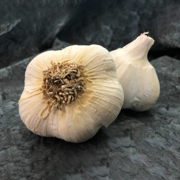 Romanian Red Keene Garlic