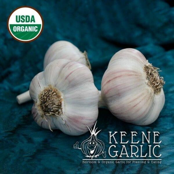 Romanian Red Organic Keene Garlic Bulb