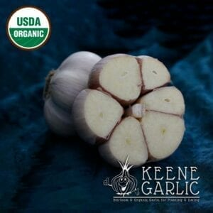 Romanian Red Organic Keene Garlic Bulb