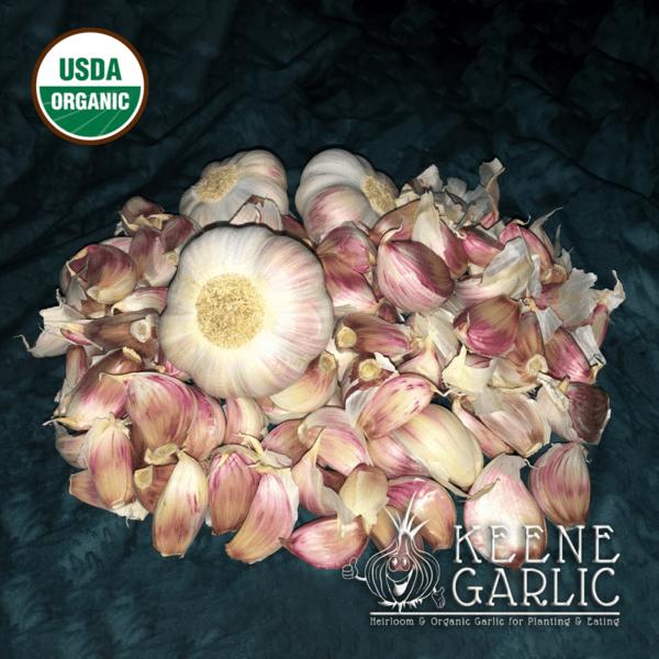 Rose-de-Lautrec Garlic Bulbs