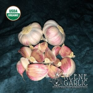 Rose-de-Lautrec Garlic Bulbs