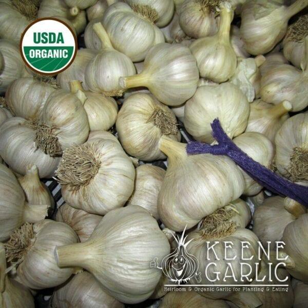 Spanish Roja Organic Keene Garlic